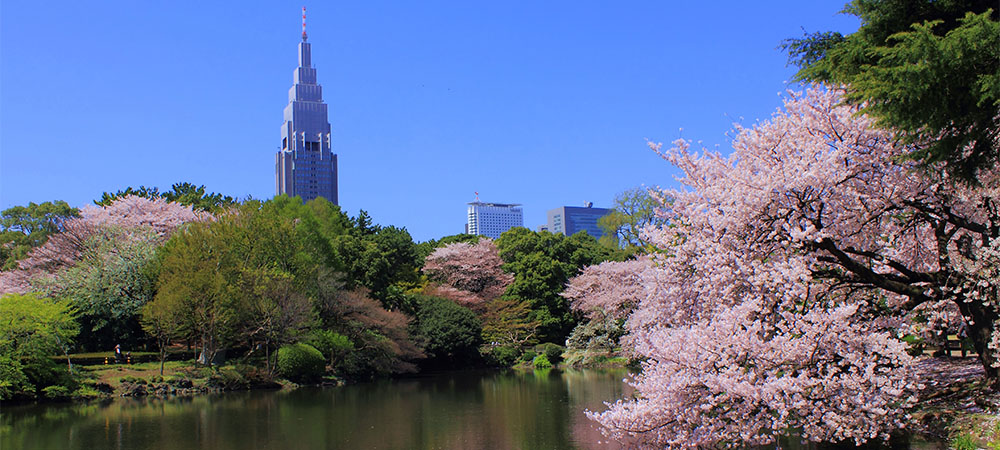 「shinjuku gyoen sight seeing」の画像検索結果
